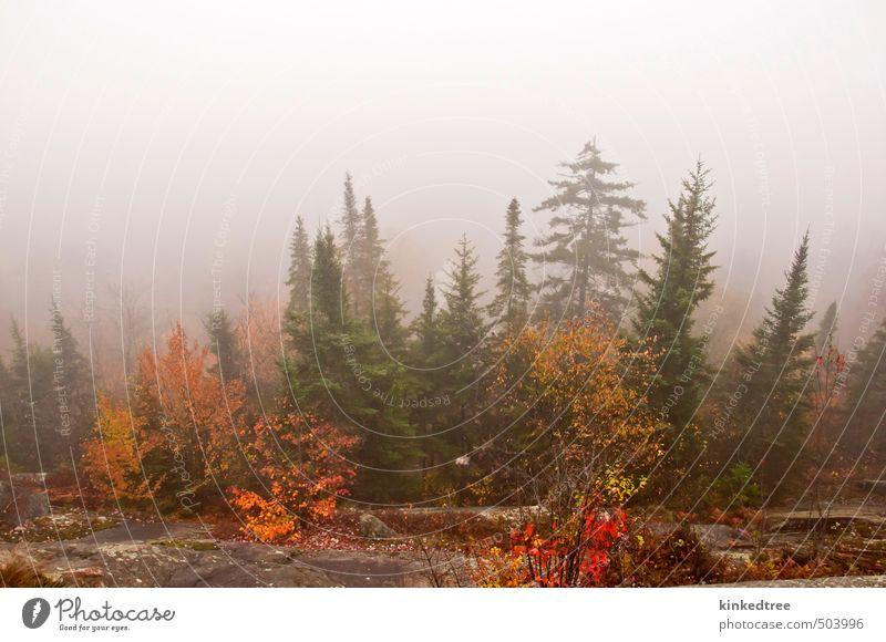 Nebliger Herbstmorgen Ferien & Urlaub & Reisen Abenteuer Sightseeing Berge u. Gebirge wandern Umwelt Natur Landschaft Pflanze Wolken Wetter Nebel Baum Sträucher