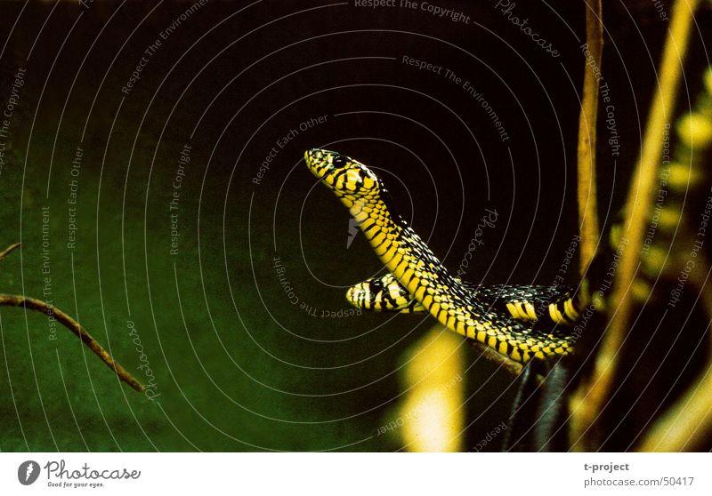 Schlangen Schlange Anmut Reptil