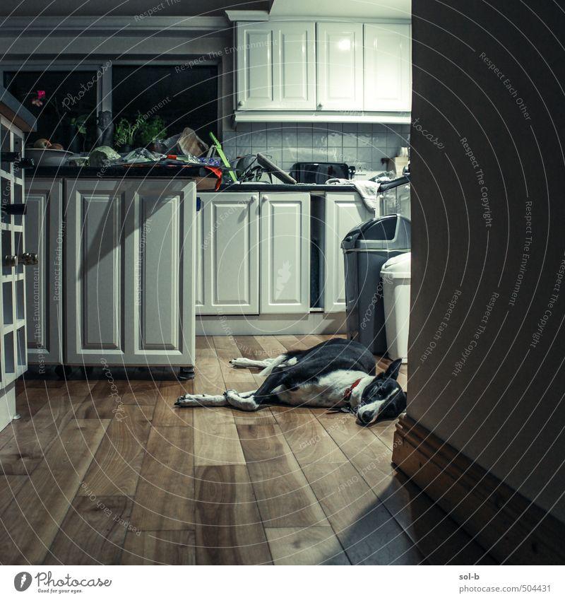 Mitternacht Lifestyle Häusliches Leben Haus Innenarchitektur Möbel Raum Küche Tier Haustier Hund Windhund 1 Erholung liegen schlafen dunkel authentisch trist