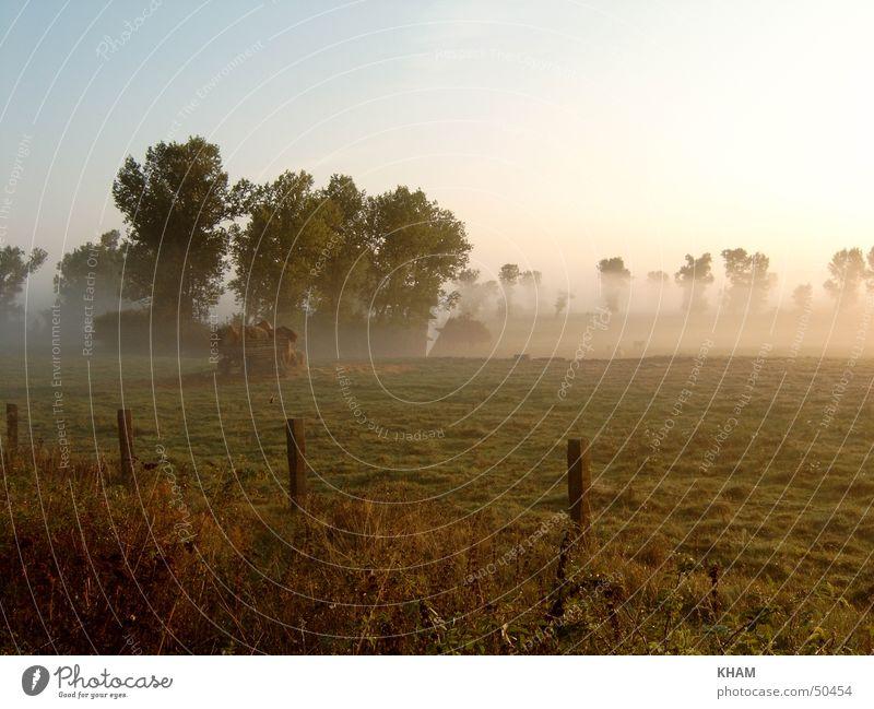 Morgennebel Pflanze Wiese Traurigkeit Landschaft Nebel Wetter Weide