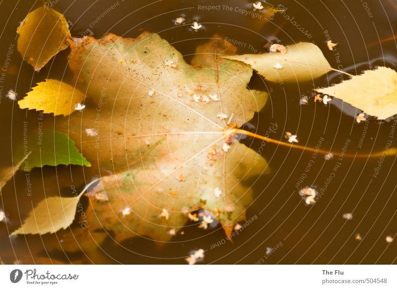 Schmutziger Herbst Umwelt Natur Pflanze Wasser Klima Wetter schlechtes Wetter Wind Sturm Regen Blatt Ahornblatt Birkenblätter Garten Park Wiese Feld Wald alt