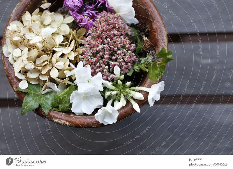 Herbststrauß Pflanze grün schön weiß Einsamkeit ruhig Blüte Holz grau Garten Stein braun Stimmung rosa Zufriedenheit