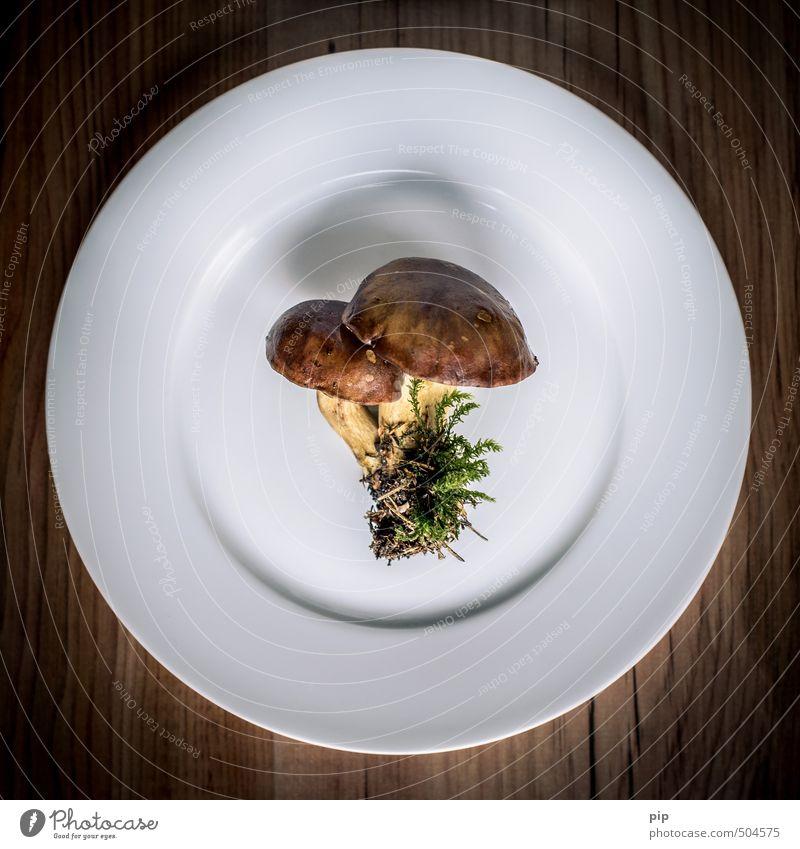 einfacher pilzteller Gemüse Teller Herbst Wildpflanze Pilz Maronenröhrling frisch Ernährung Natur weiß braun rund minimalistisch heimisch Moos essbar Farbfoto