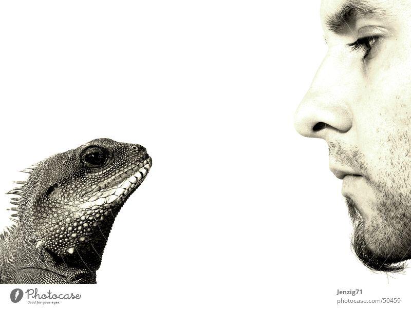 Nonverbale Kommunikation. Agamen Wasseragame Echsen Reptil sprechen stumm Blick
