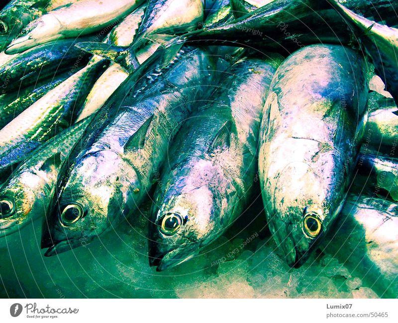 Frischer Fisch Fischmarkt grün glänzend frisch Makrele Meer Gebiss Ernährung Markt Scheune blau silber Tod fangfrisch Fischauge Eis fish