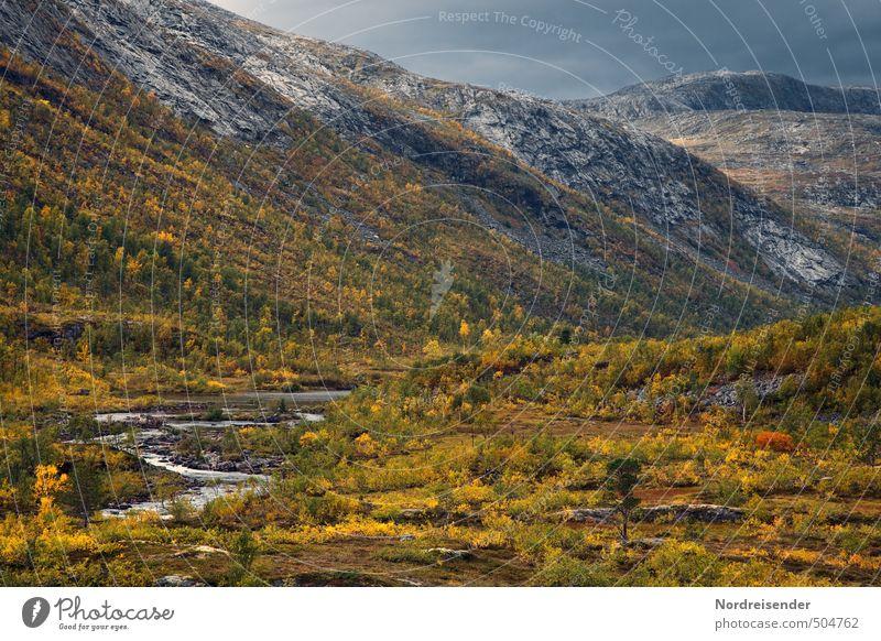 Herbst in Lappland Natur Farbe Pflanze Einsamkeit Landschaft Ferne Wald Berge u. Gebirge Herbst Freiheit Felsen Stimmung Wetter wandern Abenteuer Vergänglichkeit