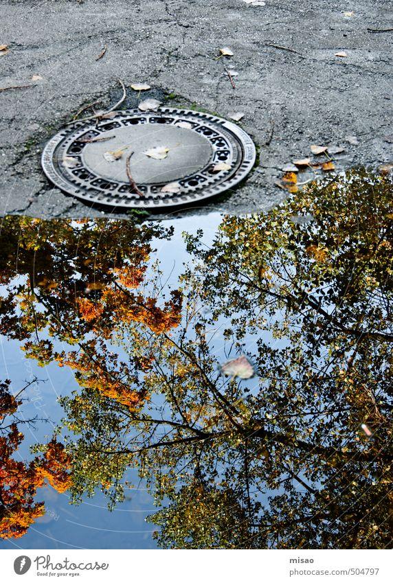 Herbst in der Pfütze Natur Stadt blau grün Baum ruhig Umwelt Straße Bewegung grau gehen orange Zufriedenheit Wachstum stehen Beginn