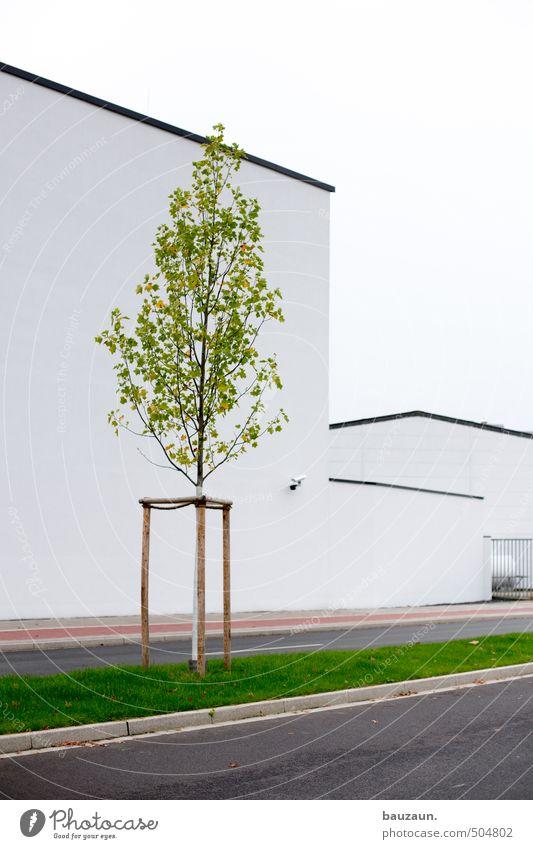 >. Himmel Stadt grün weiß Baum Wand Straße Gras Wege & Pfade Mauer Architektur Gebäude grau Holz Stein Linie
