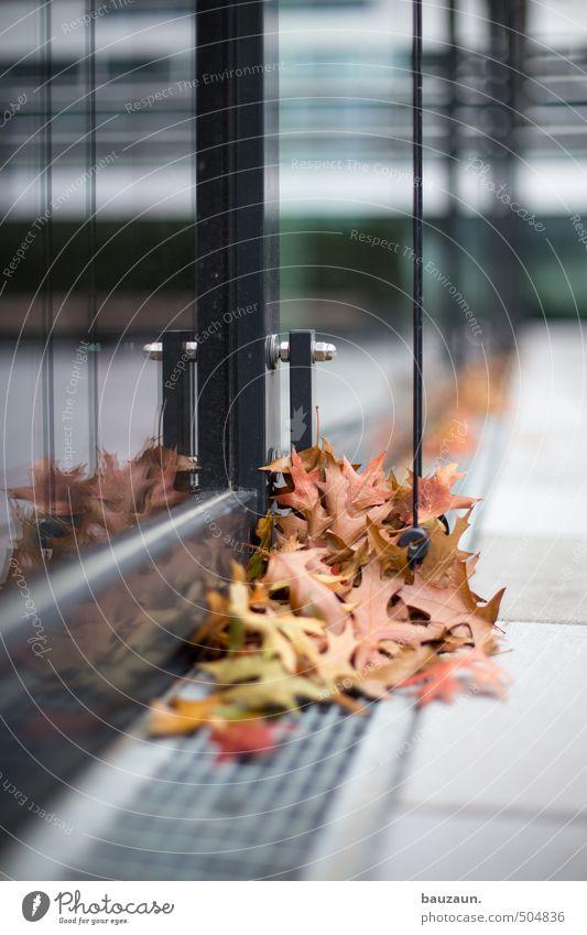 sammelstelle. Baum Blatt schwarz Fenster Tod Herbst Wege & Pfade Architektur Gebäude grau Stein Garten Linie Metall braun Park