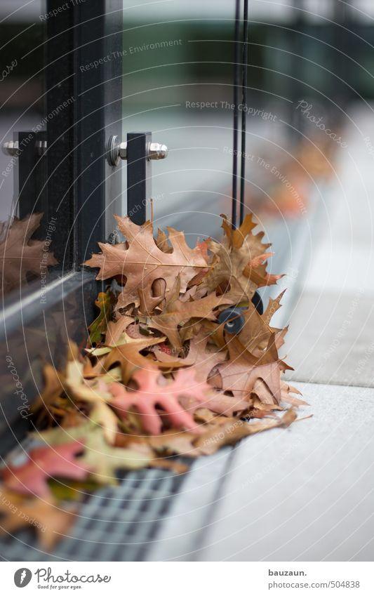 herbst. Blatt schwarz Fenster Herbst Architektur Gebäude grau Stein Garten Metall braun Park Fassade Hochhaus Platz Vergänglichkeit
