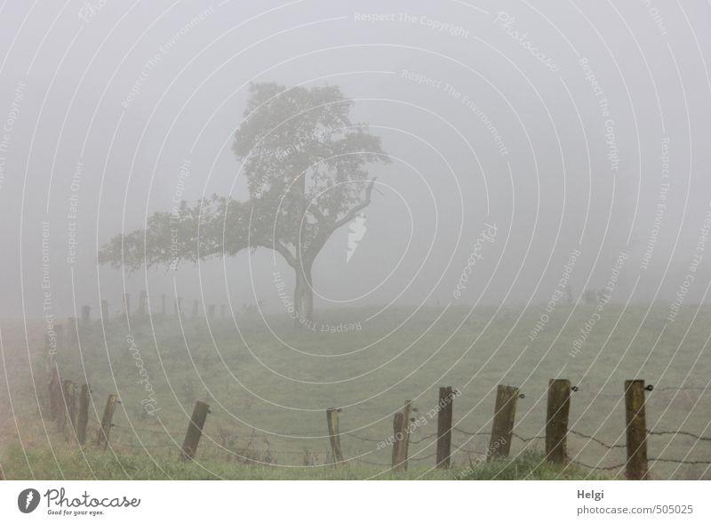 November . Umwelt Natur Landschaft Pflanze Herbst Nebel Baum Gras Wiese Zaun Zaunpfahl Draht Holz Metall stehen Wachstum authentisch außergewöhnlich dunkel kalt