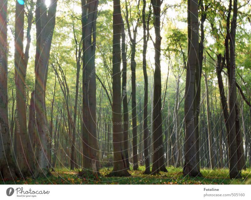 Licht ins Dunkel Umwelt Natur Landschaft Pflanze Herbst Baum Wald hell natürlich Wärme Buchenwald Buchengewächs Farbfoto mehrfarbig Außenaufnahme Menschenleer