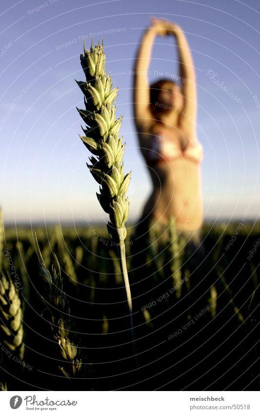 zu (ä)ehren 4 strecken Dame Korn