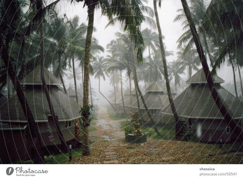 Tropengewitter schön Himmel Meer grün Freude Ferien & Urlaub & Reisen Wald Freiheit Traurigkeit Wärme Regen braun Trauer Insel Asien Physik
