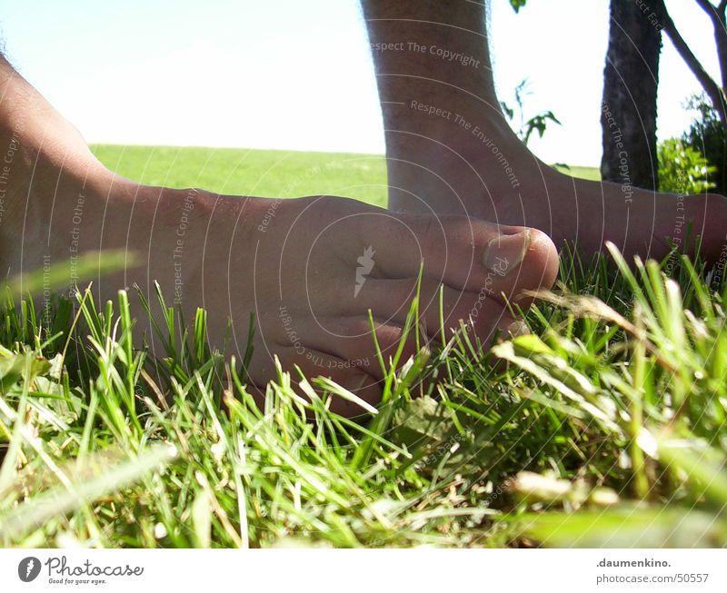 Sinnenbad Gras Wiese Zaun grün braun zögern Barfuß planen Baum Halm Zehen Sommer Mann Rasen Fuß Sinnesorgane Gefühle Inspiration genießen