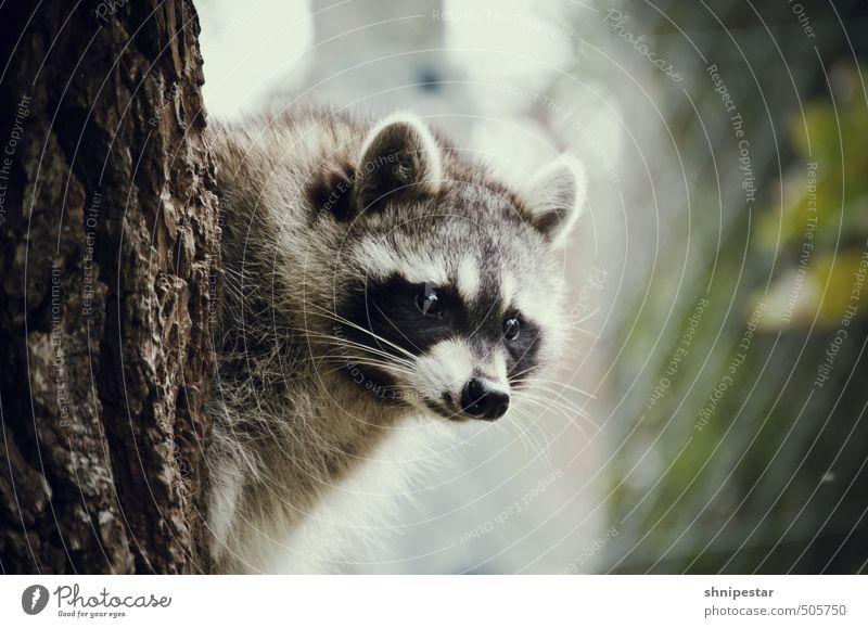 Kuschelweich Erholung ruhig Tier Umwelt Leben Herbst braun Wildtier Tourismus wandern beobachten Neugier Wellness Körperpflege Mut kuschlig