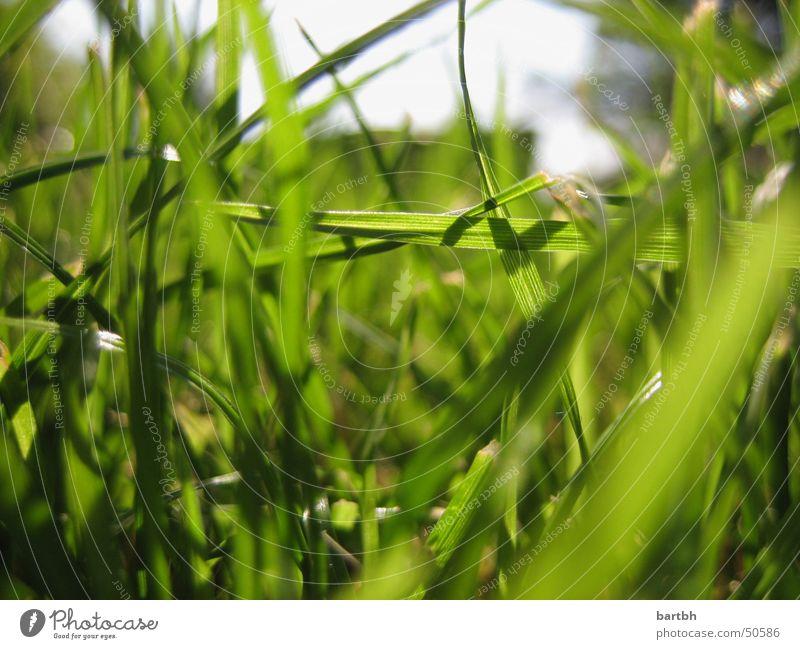 grünes Gras grass Natur