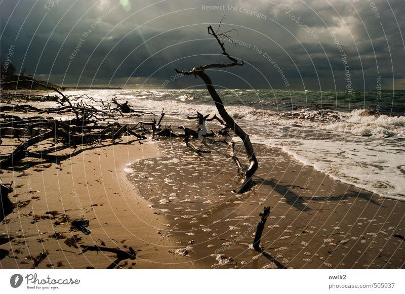 Nach dem Sturm Umwelt Natur Landschaft Pflanze Urelemente Wasser Himmel Gewitterwolken Horizont Klima Schönes Wetter Wind Wellen Küste Ostsee Weststrand Sand