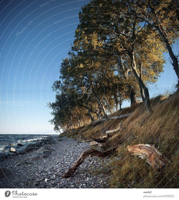 Inseldasein Natur Pflanze Wasser Baum Landschaft Strand Umwelt Gras Küste Holz Stein Horizont wild Wetter Wachstum leuchten
