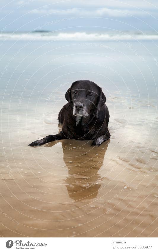 have a break Hund Natur Ferien & Urlaub & Reisen alt Wasser Meer Erholung Landschaft Tier Strand Senior Gefühle Küste Sand natürlich liegen