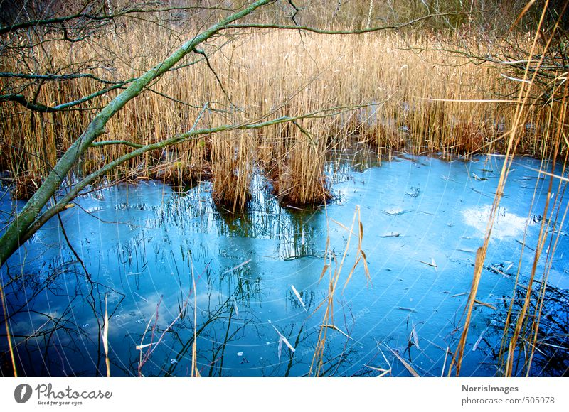 Erstarrt Umwelt Natur Landschaft Pflanze Wasser Herbst Eis Frost Gras Sträucher Wald Moor Sumpf Bach ästhetisch kalt blau braun träumen Einsamkeit Gefühle