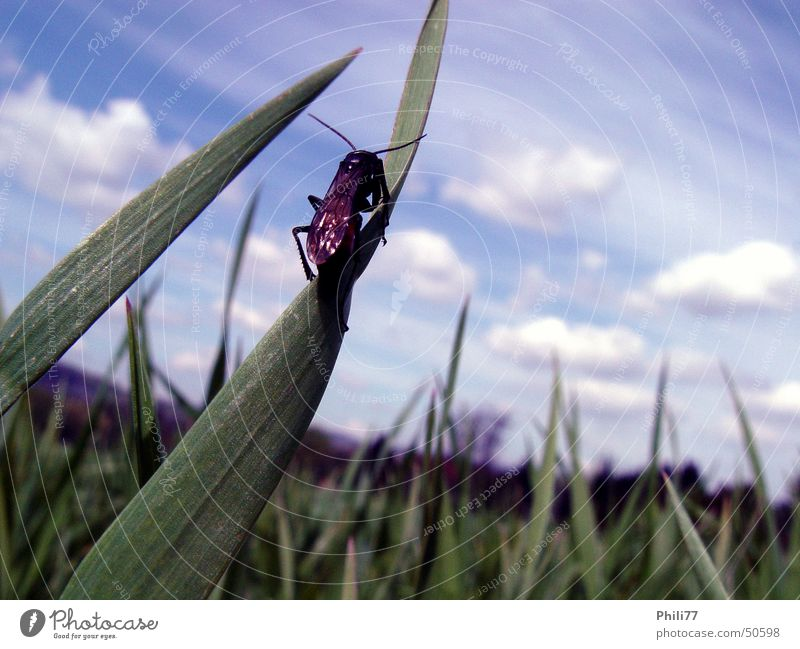 Krabbeltier Himmel Blume grün Sommer Tier Wiese Fliege Insekt Käfer Blauer Himmel