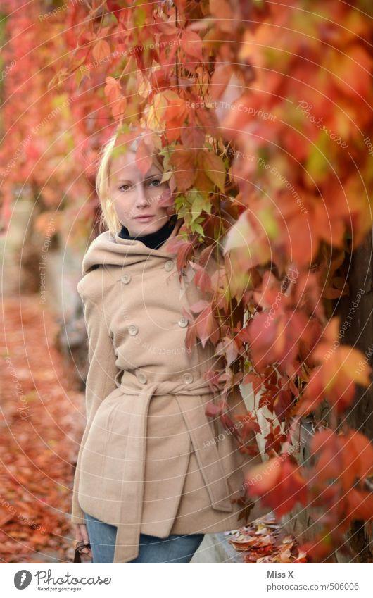 Roter Wein Mensch feminin Junge Frau Jugendliche 1 18-30 Jahre Erwachsene Herbst Pflanze Blatt Garten verblüht blond schön rot Wilder Wein Kletterpflanzen