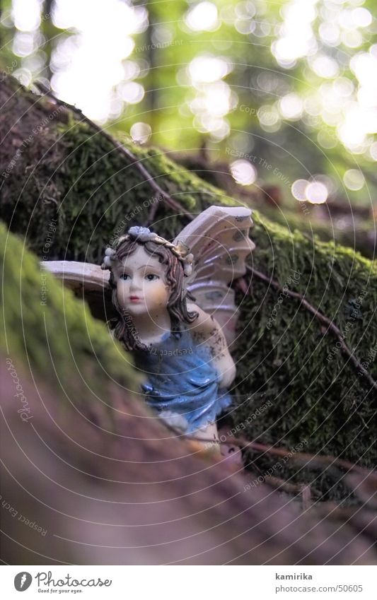 waldelfe Wald Holz Engel Moos Wurzel Angelrute Elfe 11 Holzmehl
