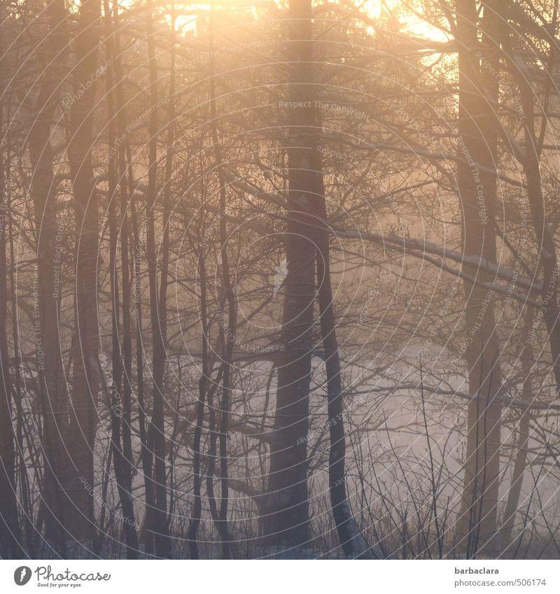 Morgenlicht Landschaft Erde Sonnenlicht Winter Eis Frost Schnee Baum Sträucher Wald leuchten ästhetisch Stimmung Lebensfreude Warmherzigkeit ruhig Beginn