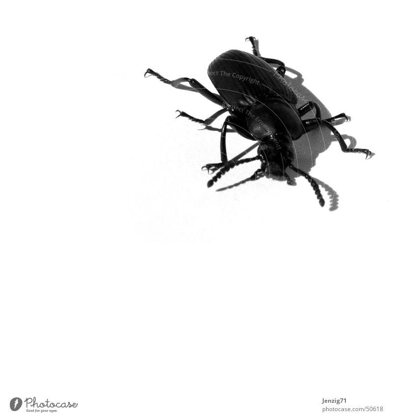 Mein bug, dein bug... Insekt Käfer krabbeln Schiffsbug Schädlinge