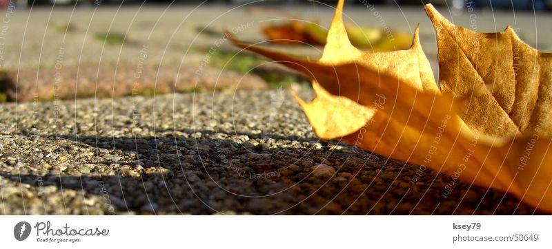 Herbstsonne Sonne Blatt Asphalt