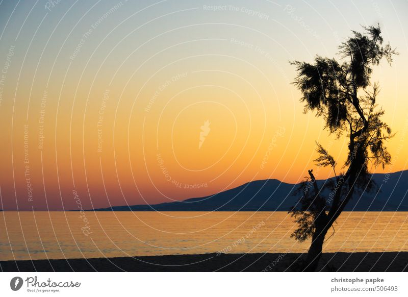 Reif für die Insel Ferien & Urlaub & Reisen Sommer Sommerurlaub Strand Meer Wolkenloser Himmel Sonnenaufgang Sonnenuntergang Schönes Wetter Baum Küste Kitsch
