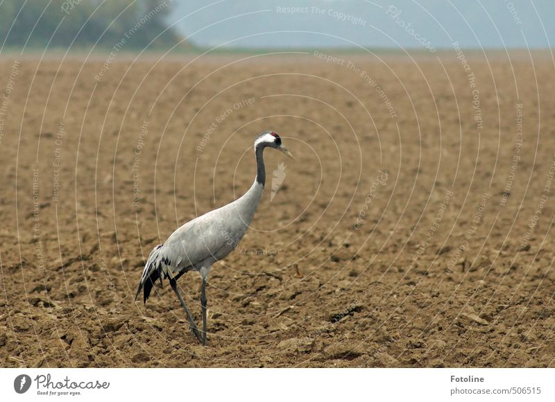 Kranich Natur Landschaft Tier schwarz Umwelt Herbst grau Sand natürlich braun Vogel Feld Erde Wildtier Urelemente nah