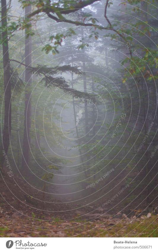 Allein im Zauberwald Freizeit & Hobby Abenteuer wandern Natur Landschaft Wetter Nebel Baum Wald Urwald Denken träumen außergewöhnlich fantastisch Gesundheit