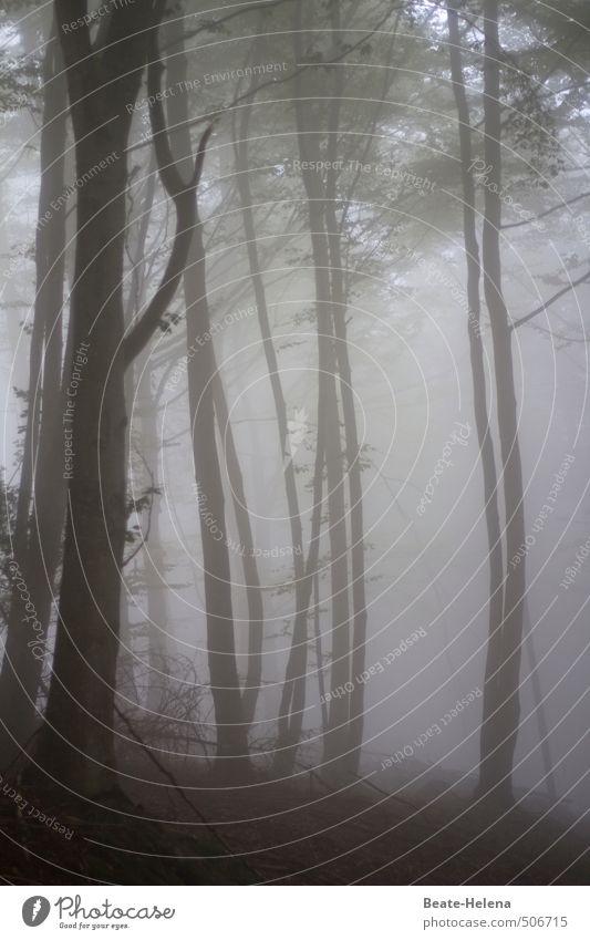 Geduld | Die lichten Momente setzen sich durch Natur Baum Erholung Landschaft Wolken dunkel Wald kalt Traurigkeit Herbst Gefühle natürlich grau Stimmung braun