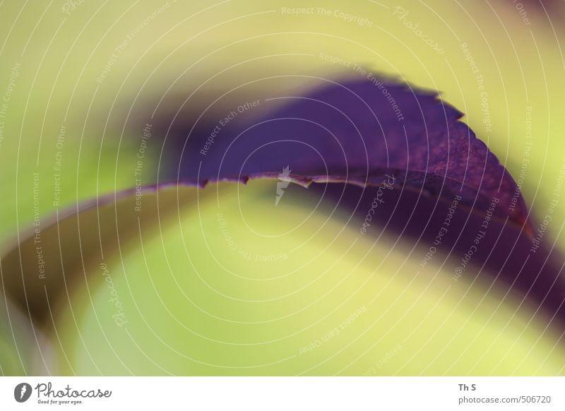 Blatt Natur schön grün ruhig Blatt Stil Zufriedenheit Energie ästhetisch Kreativität einzigartig violett Gelassenheit harmonisch