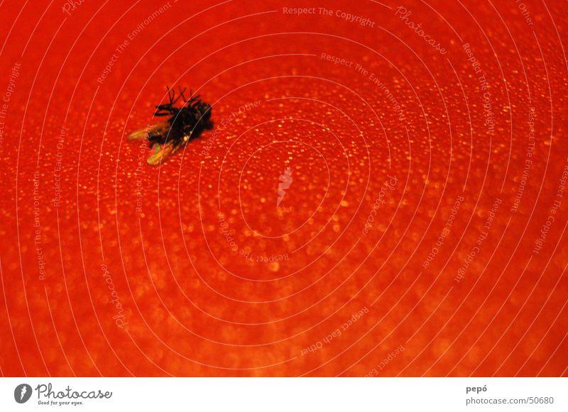 i´m fearful of FLYing rot schwarz Tod Fliege Insekt auf dem Rücken