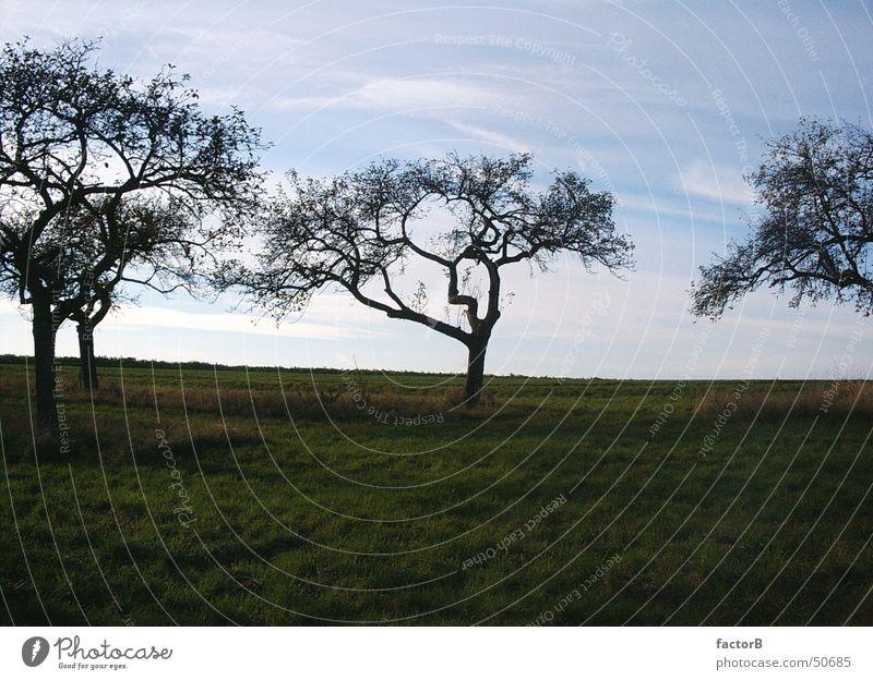 Apfelbaum im Herbst Baum Wiese Eifel Natur Himmel Landschaft Spaziergang
