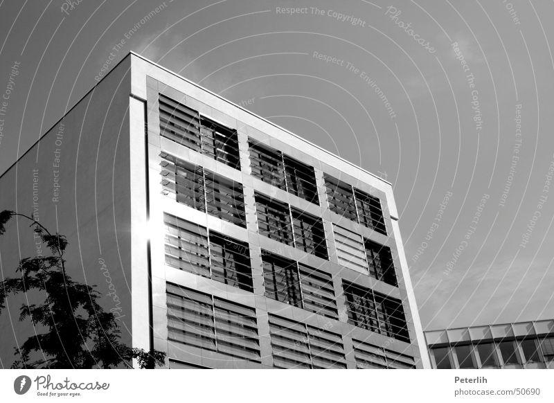 Würfel Haus Sommer modern Architektur Schwarzweißfoto Fassade Klassische Moderne Jalousie Fassadenverkleidung Moderne Architektur Grauwert