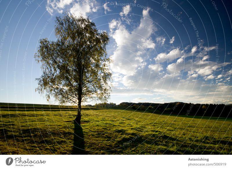 der einsame Baum Umwelt Natur Landschaft Pflanze Himmel Wolken Horizont Sommer Wetter Schönes Wetter Wärme Gras Blatt Wiese Wald Hügel Mühlviertel Österreich