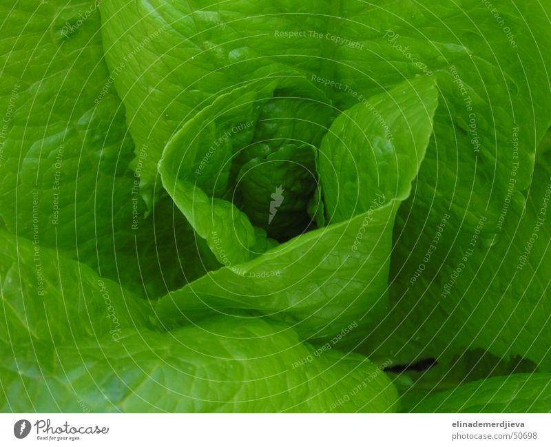 Letuce weich Licht letuce vegetable leaf leaves light twist air salad