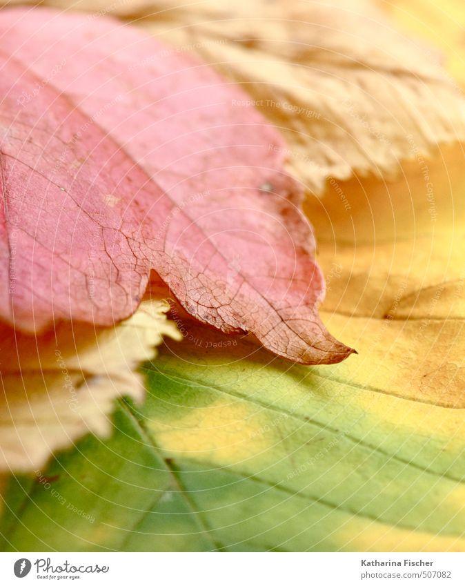 Abschied Umwelt Natur Frühling Herbst Pflanze Blatt Garten Wald Wandel & Veränderung Vergänglichkeit mehrfarbig Farbfoto Gedeckte Farben Außenaufnahme