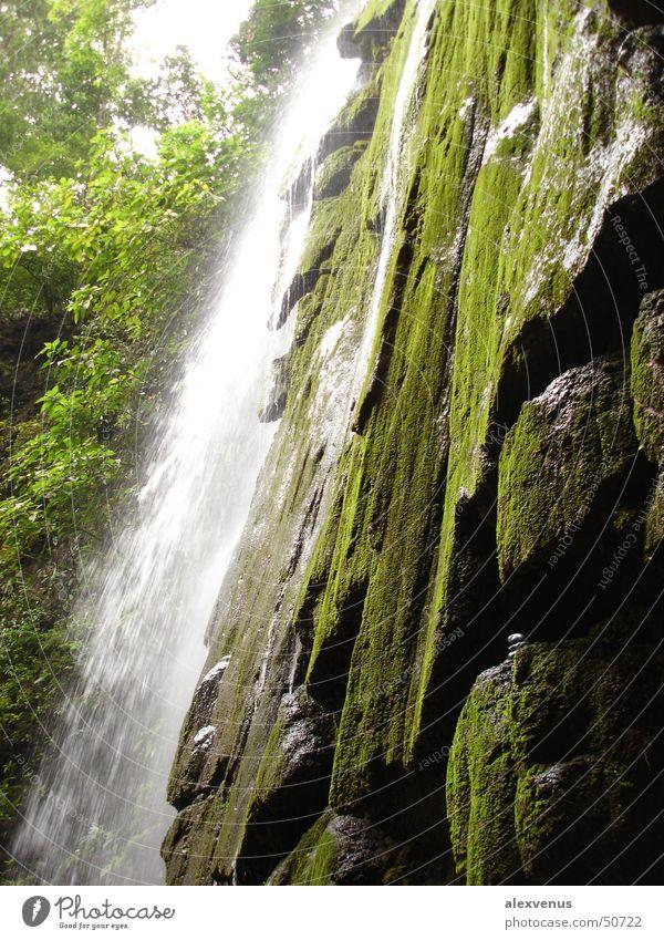 wasserfall in costa rica Natur grün Urwald Wasserfall Costa Rica