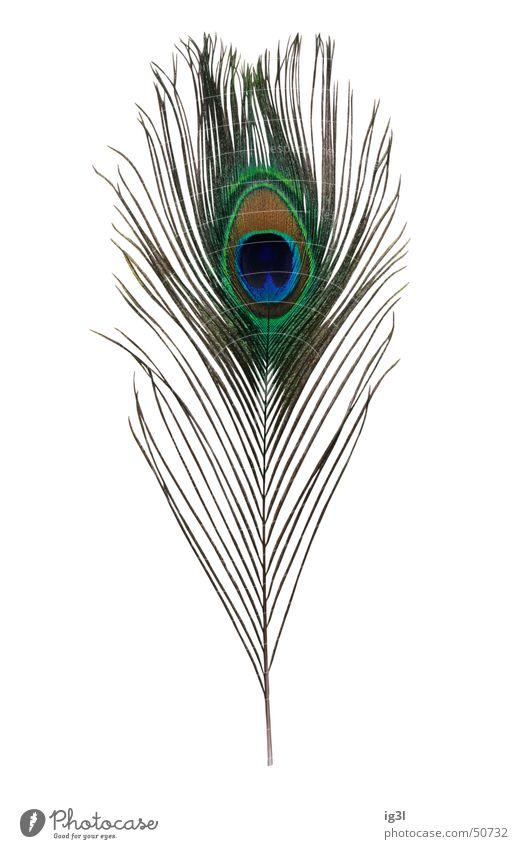 blindes auge grün blau schön Freude Einsamkeit Auge elegant glänzend bedrohlich Feder weich dünn Teile u. Stücke einzeln Schmuck Wachsamkeit