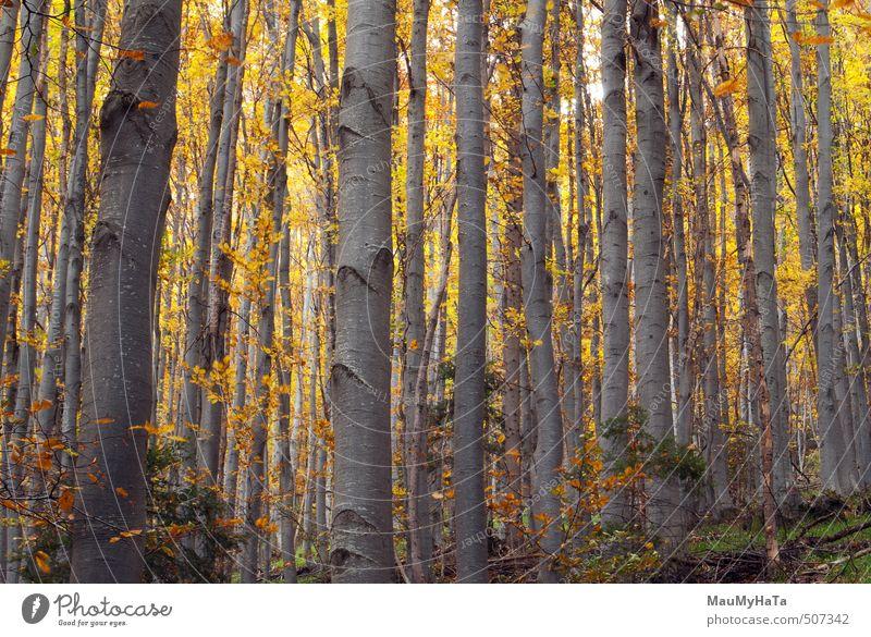 Wald schön Abenteuer wandern Umwelt Natur Landschaft Pflanze Herbst Baum Blatt Wachstum dick Unendlichkeit hell grün rot Idylle Hintergründe Beautyfotografie