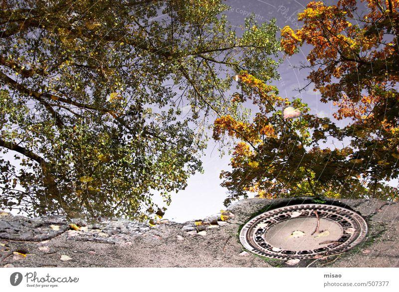 Herbst in der Pfütze II Duft Baustelle Sonnenenergie Umwelt Natur Luft Wolkenloser Himmel Schönes Wetter Baum Park Stadt Stadtrand Menschenleer Platz