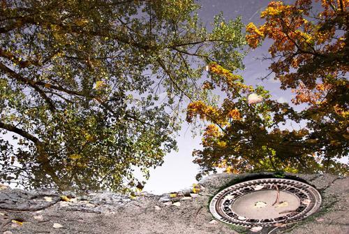 Herbst in der Pfütze II Natur Stadt grün Baum ruhig Umwelt Straße grau Metall Luft braun orange Park Schönes Wetter Platz