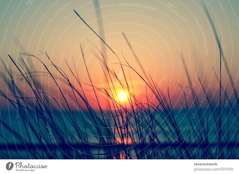 Sylt Natur Landschaft Sand Wasser Himmel Wolkenloser Himmel Horizont Sonne Sonnenaufgang Sonnenuntergang Sonnenlicht Sommer Schönes Wetter Gras Sträucher Wellen