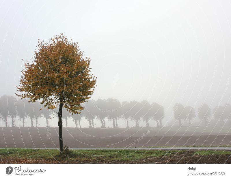 herbstlich... Umwelt Natur Landschaft Pflanze Herbst Nebel Baum Feld Straße stehen dehydrieren Wachstum ästhetisch authentisch dunkel natürlich braun grau grün