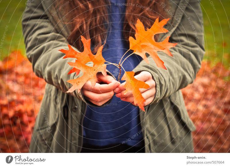 Ich schenke dir ein bisschen Herbst. :) feminin Hand 1 Mensch Blatt Zweig Jacke brünett langhaarig festhalten authentisch natürlich blau braun gelb gold grün